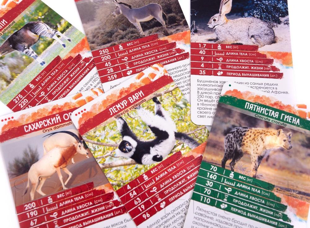 Карточки из настольной игры Секреты Планеты: Животные Африки