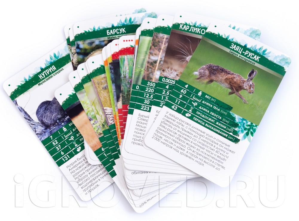 Карточки  настольной игры Секреты Планеты: Животные Европы